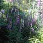 Garden design and maintenance St Albans